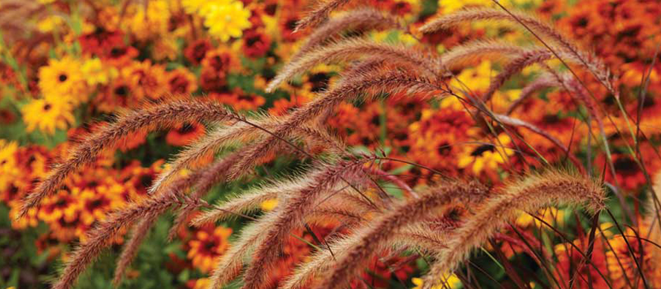 , Planting Ornamental Grasses, Redwood Nursery & Garden Center, Redwood Nursery & Garden Center