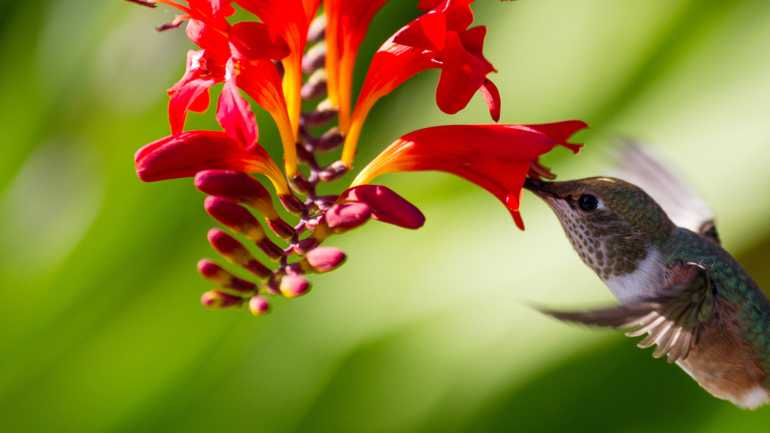 , Bower & Branch, Audubon Society Partner to Promote Bird-Friendly Plants, Redwood Nursery & Garden Center, Redwood Nursery & Garden Center