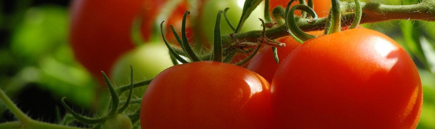 , 6 Simple Tips for Better Tomatoes, Redwood Nursery & Garden Center, Redwood Nursery & Garden Center