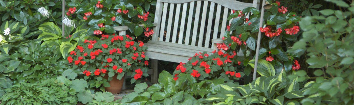 , Shade Gardening for Beginners, Redwood Nursery & Garden Center, Redwood Nursery & Garden Center