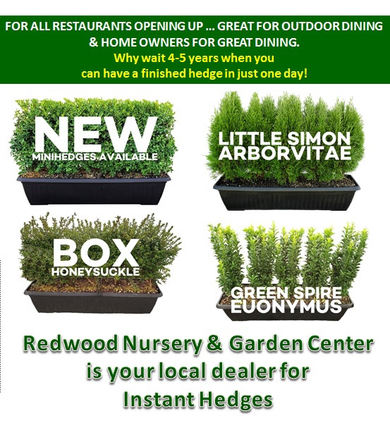 , Instant Privacy Planters, Redwood Nursery & Garden Center, Redwood Nursery & Garden Center