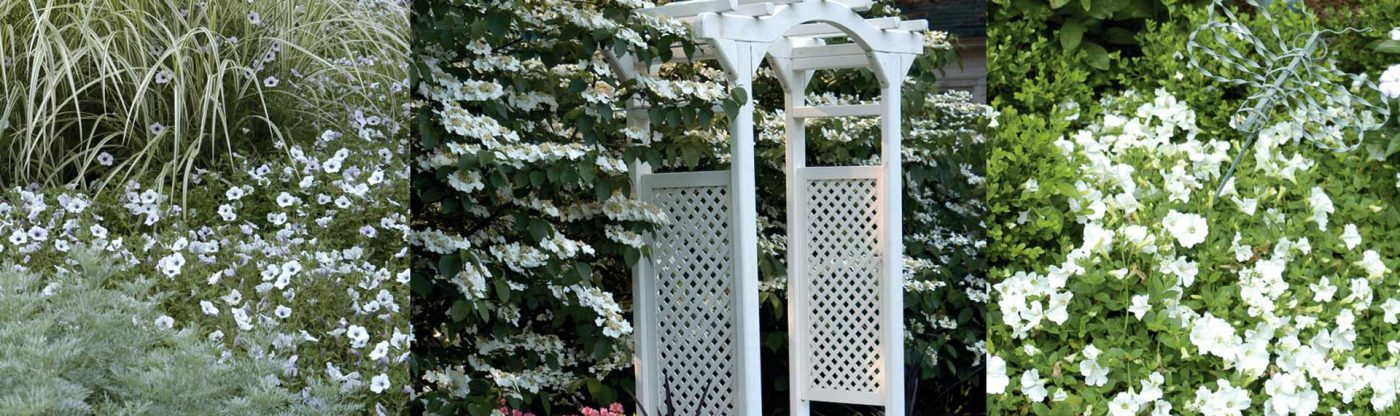 , Planting a Moon Garden, Redwood Nursery & Garden Center, Redwood Nursery & Garden Center