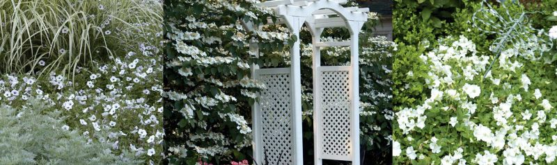 potted and hanging plants, Redwood Nursery – Potted and Hanging Plants in Swansea, MA, Redwood Nursery & Garden Center, Redwood Nursery & Garden Center